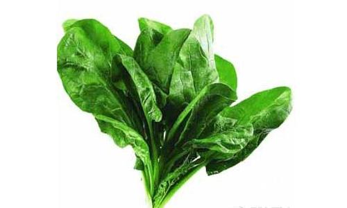 菠菜-降血压首选食品