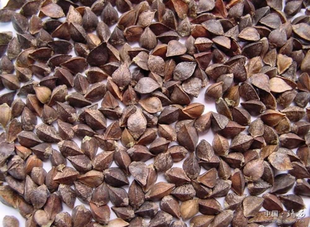 带壳的荞麦(三角麦)图片