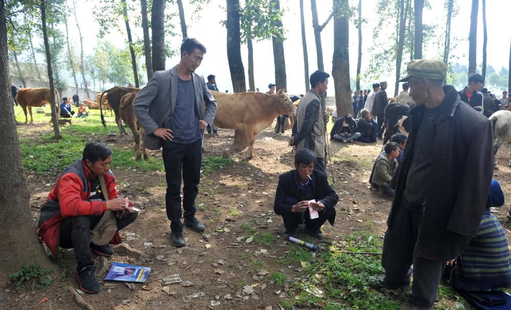 图片[2]|苦荞之乡四川大凉山的特色生活:牲畜交易市场,买卖双方谈好价就数钱,一天交易六千头|苦荞之家