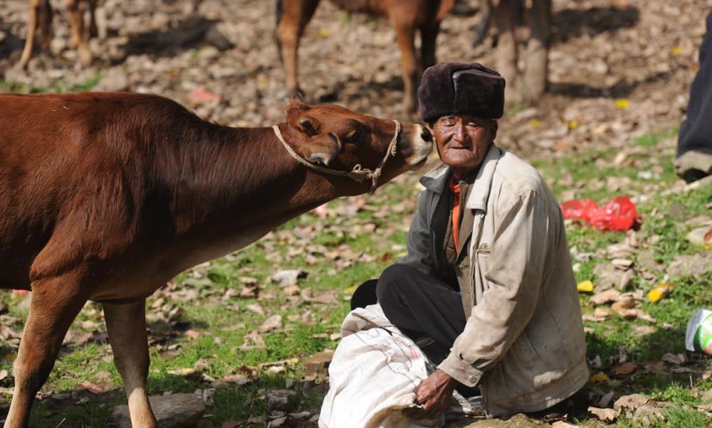 苦荞之乡四川大凉山的特色生活:牲畜交易市场,买卖双方谈好价就数钱,一天交易六千头