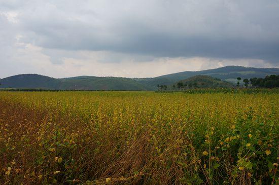 图片[7] 四川美姑苦荞栽培系统-中国重要农业文化遗产 苦荞之家