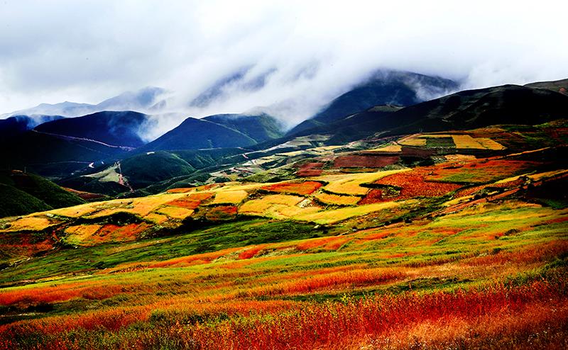 图片[3] 四川美姑苦荞栽培系统-中国重要农业文化遗产 苦荞之家