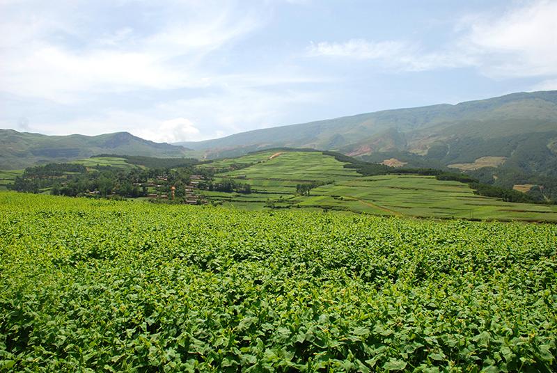 图片[2] 四川美姑苦荞栽培系统-中国重要农业文化遗产 苦荞之家