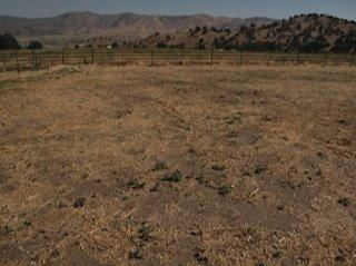 图片[1]|荞麦种植记(二)|苦荞之家