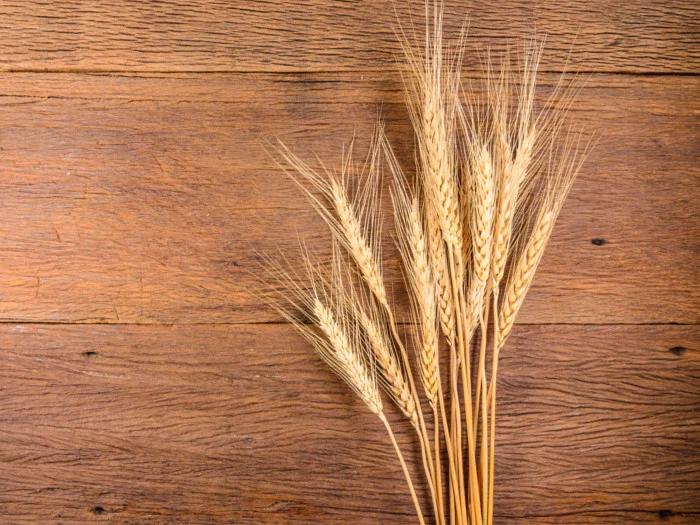 图片[1]|大麦的十大好处|苦荞之家